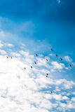 Birds lives. In the natural environment Royalty Free Stock Image