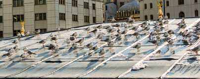 Birds lives. In the roof Royalty Free Stock Image