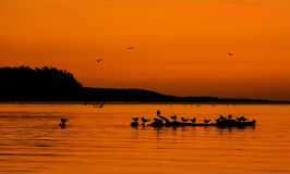Birds On Log. After sunsets with a warm glow in the sky, bird find some where to preach for the night royalty free stock photo