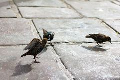 Birds in London. Outdoors animal in the city Stock Photo