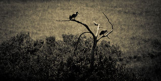 Birds looking out Royalty Free Stock Image