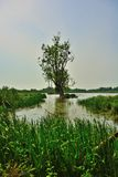Birds lookout , floated meadow and old trees Stock Photography