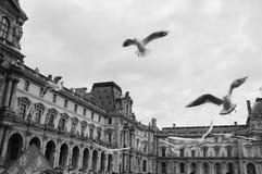 Birds at Louvre. Pigeons in flight at Louvre, Paris Stock Images