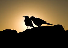 Birds in love. Birds against the sunlight, South Africa Stock Photo