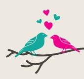 Birds love. Over white background vector illustration Royalty Free Stock Image