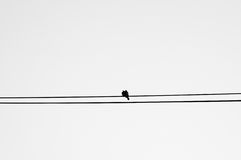 Birds. Love birds on a wire Stock Photo