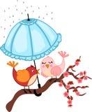 Birds lovers to rain Royalty Free Stock Photo