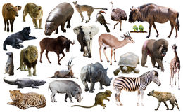 Free Birds, Mammal And Other Animals Of Africa Isolated Stock Image - 94260261