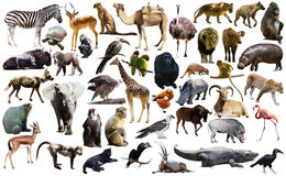 Birds, mammal and other animals of Africa isolated Stock Image