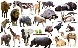 Birds, mammal and other animals of Africa isolated Royalty Free Stock Photography