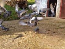Birds in fly Stock Photos