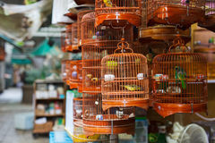 Birds market Royalty Free Stock Images