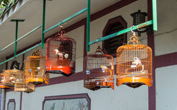 Birds market. Birds in cages for sale at Birds market, Kowloon Hong Kong, popular tourist destination Royalty Free Stock Images