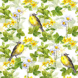 Birds, meadow: herbs, flower, grass. Floral repeating pattern. Watercolor. Birds in meadow - herbs, flower, grass. Watercolor floral repeating pattern Royalty Free Stock Photo