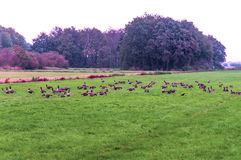 Birds on the meadows Royalty Free Stock Images