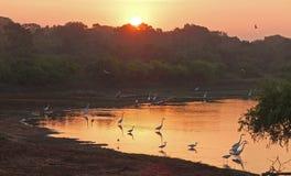 Birds meet the sunrise on the lake in Sri Lanka.  royalty free stock photography