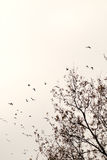 Birds migrate south Stock Images