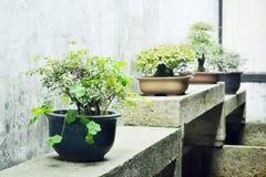 Pot plant. S closeup in a courtyard royalty free stock photos