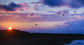 Birds migrating past mountains while sun is setting royalty free stock photo