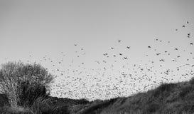 Birds migrating sky Stock Image