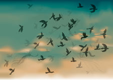 Birds Migration Royalty Free Stock Photos