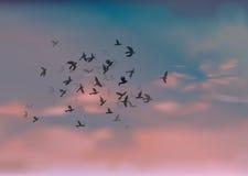 Birds Migration Royalty Free Stock Photo