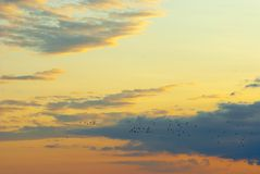 Birds migration. Flock of birds flying in the sky Stock Photos