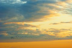 Birds migration. Flock of birds flying in the sky Stock Images