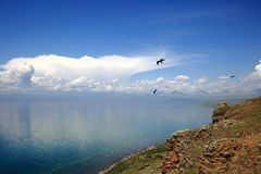 Birds of Mongolian lake Hovsgol. From a steep Bank overlooking the beauty: the bottom – emerald green water of Mongolian lake Hovsgol, and above it a wild Stock Photo