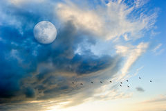 Birds Moon Clouds Royalty Free Stock Image