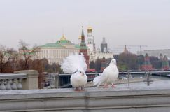 Moscow city, capital of Russia stock photography