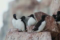 Birds on the mountain nature. Moment wildlife zoo trees best photo stock image