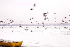 Birds in Movement Winter Season Royalty Free Stock Photo