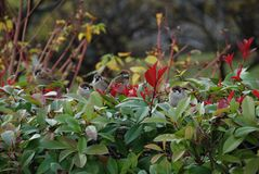 Birds. In the nature sitting on a bush Royalty Free Stock Photos