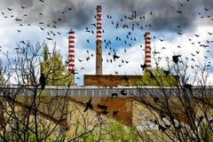 Birds Near Factory Stock Photos