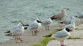Birds near the Seaside Royalty Free Stock Photo