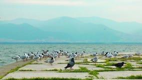 Birds near the Seaside Royalty Free Stock Photography