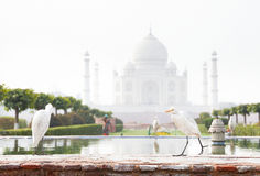 Birds near Taj Mahal Royalty Free Stock Image