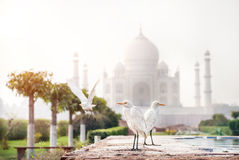 Birds near Taj Mahal Stock Photography