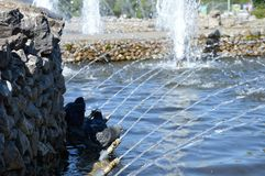 Birds near the water in fountain. In summer day Royalty Free Stock Photography