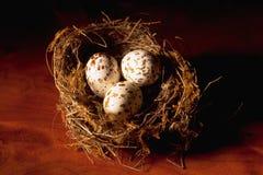 Birds Nest. Bird's nest with three eggs stock photography
