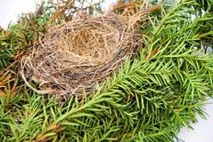 Birds Nest. An empty birds nest on an evergreen branch Stock Photos