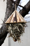 Birds nest Stock Images