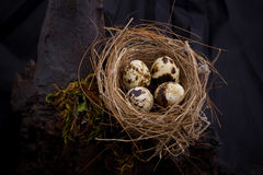 Birds nest Stock Photos