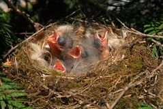 Birds in the nest. Small tabernacles Royalty Free Stock Images