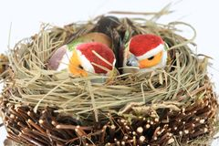 Birds in the nest Stock Image