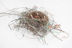 Birds Nest Royalty Free Stock Photography