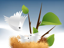 Birds and Nest  Stock Image