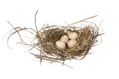 Birds nest Royalty Free Stock Image