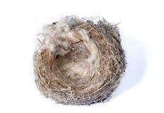 Birds Nest. Small bird nest centered on white background stock images